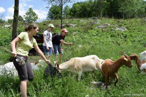 Jani smo pomagali nahraniti koze.